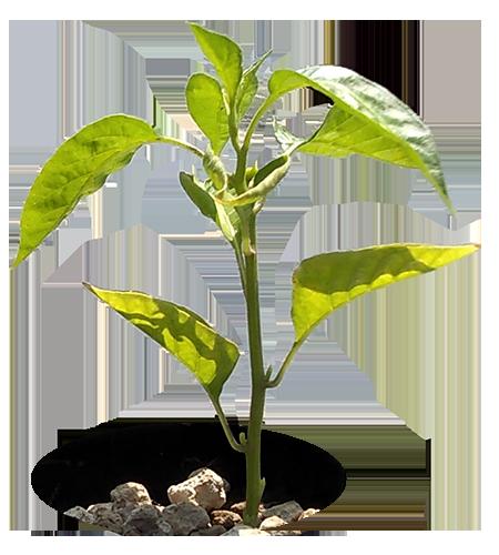 pianta-in-zeolite